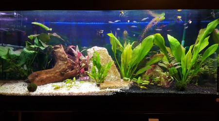 aquarium Amazonia