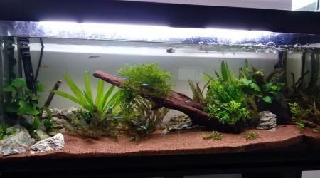 aquarium Aquarium du salon