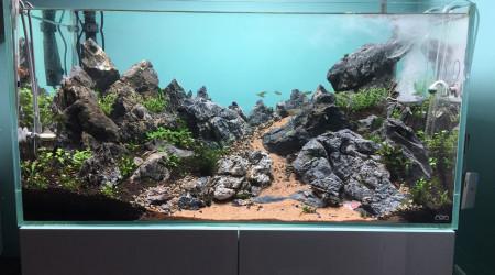 aquarium Moutainscape