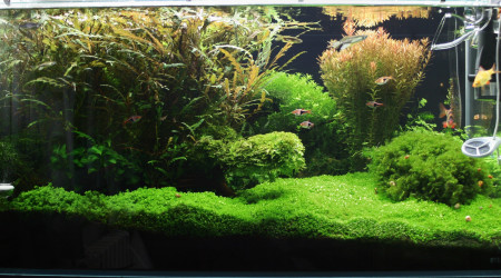 aquarium Orée du bois