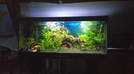 aquarium Mon premier !