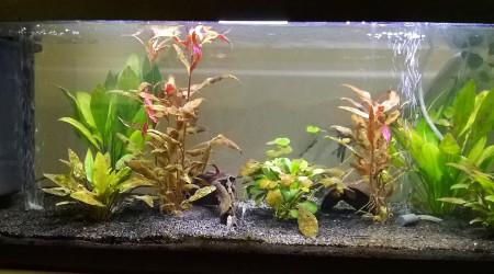 aquarium Biotope