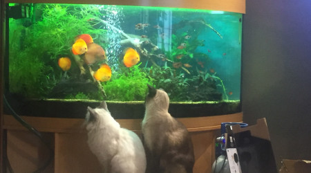 aquarium Thierry.350