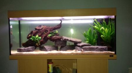 aquarium 250 l chiclides victoria