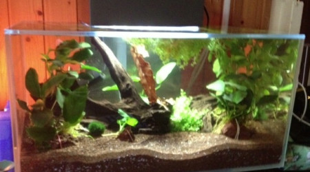 aquarium Spécifique Betta 20 litres