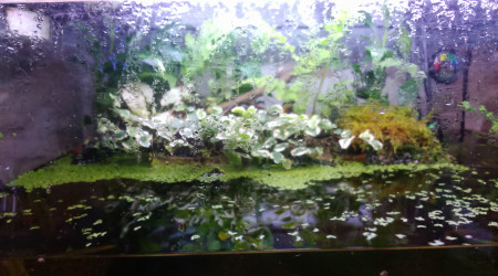 aquarium Microfish et crustacés