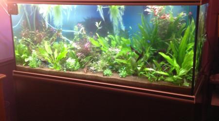 aquarium Biotope amazonien