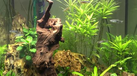 aquarium Aquarium n°1