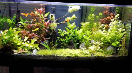 aquarium Aquadream80