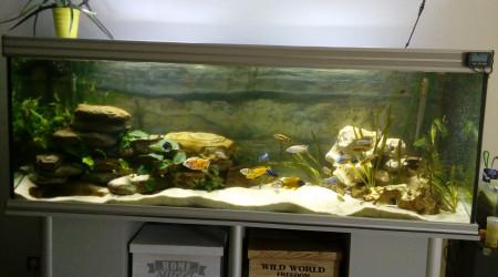 aquarium 840 l aquatlantis Malawi