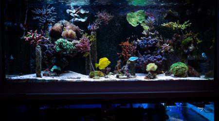 aquarium KicahTank