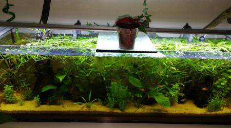 aquarium Amazonie de salon