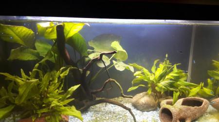 aquarium Betta 54 litres