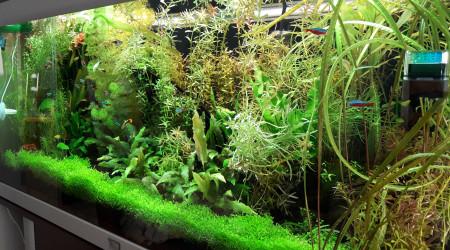 aquarium 180 L