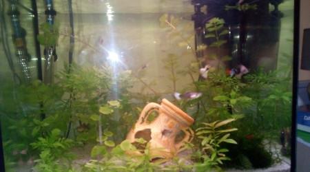 aquarium Seb