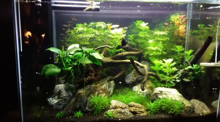 aquarium 1er aquascape