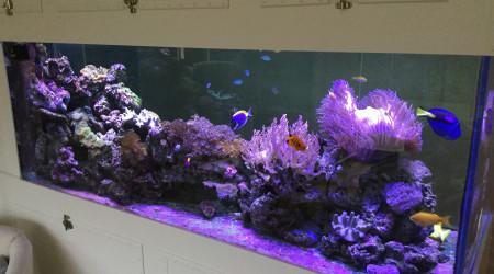 aquarium Bac cloison !