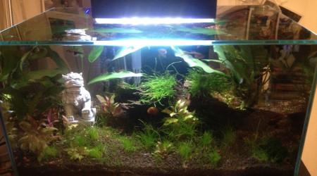 aquarium BettaBac
