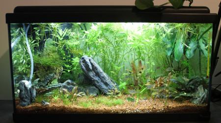 aquarium TikiBac - Aquatlantis 60L