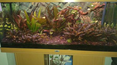 aquarium BAC AMAZONIEN