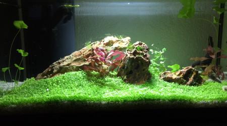 aquarium 54 litres en rodage