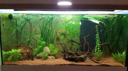 aquarium 200l asiatique