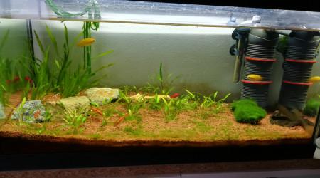 aquarium Communautaire 60L