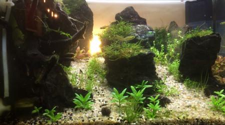 aquarium 54L Aquascaping