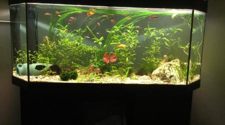 aquarium 150l