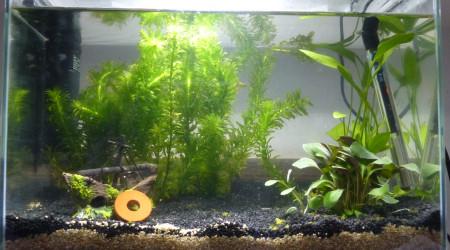aquarium 20 L
