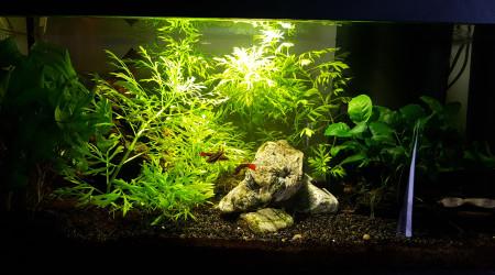 aquarium Notre premier