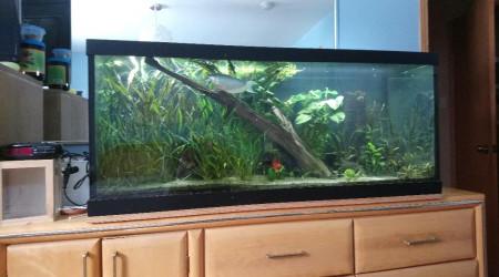 aquarium 75 gallons