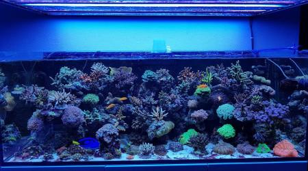 aquarium Ma petite barrière de corail