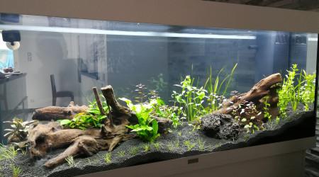 aquarium Mon premier bac