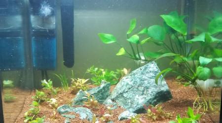aquarium Le Petit RC