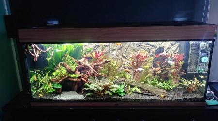 aquarium de bifi aquarium salon. Black Bedroom Furniture Sets. Home Design Ideas