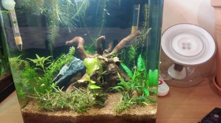 aquarium 30 litres betta