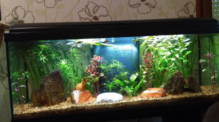 aquarium Mon aquarium