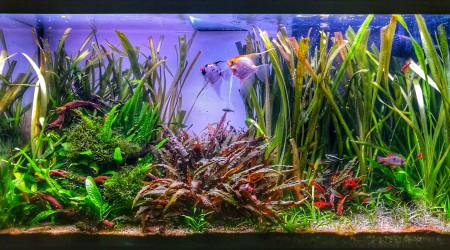 aquarium Aquatlantis 180L Rio Amazonien