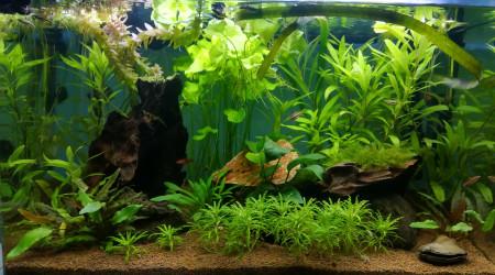aquarium Aquarium 80 litres