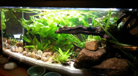 aquarium 74L néolamprologus multifasciatus