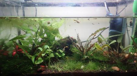 aquarium 15L nurserie
