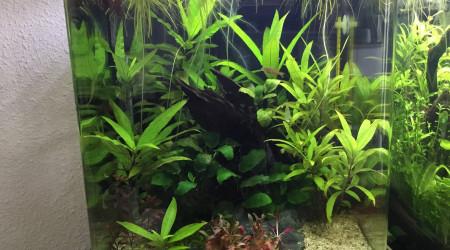 aquarium Nano 30L Betta Danio Japonica