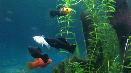 aquarium Lido200