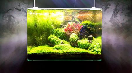 aquarium Forest