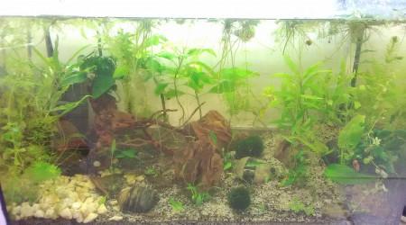 aquarium 55L Ikari