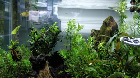 aquarium Scraper Tank 35