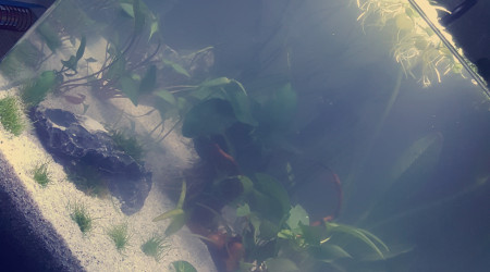 aquarium Aquarium nano