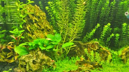 aquarium Nano dennerle