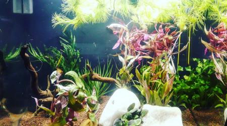 aquarium Premier aquarium